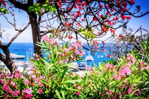View of Funchal port through the blooming flowers. Madeira island
